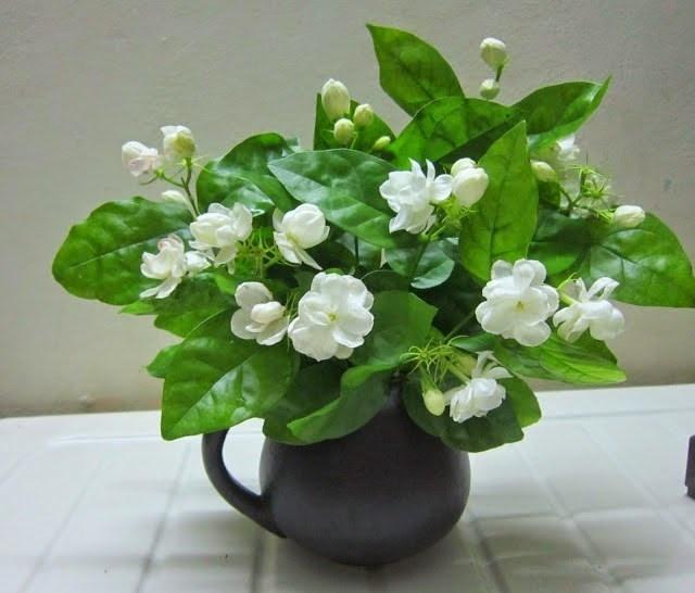 Phỉ Thúy và Cẩm Quỳ là hai mẫu cây được ưa thích nhất.