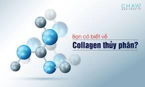 Collagen thủy phân là gì?