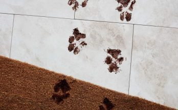 vết bẩn trên thảm